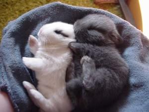 baby-easter-bunnies